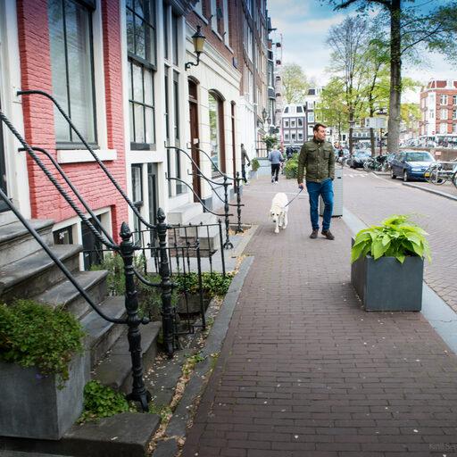 Собаки Амстердама
