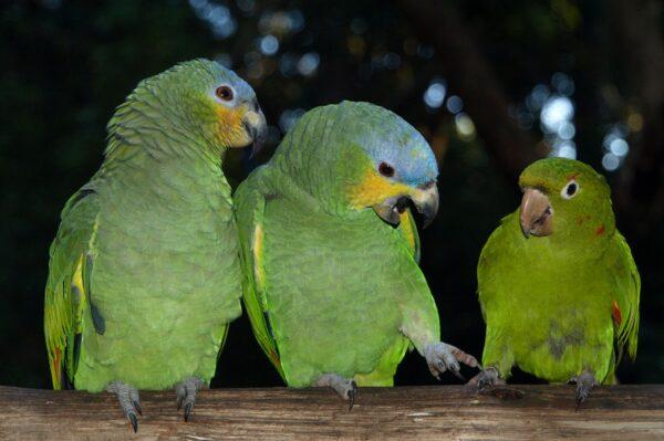 Парк птиц вИгуасу иГЭС Итайпу