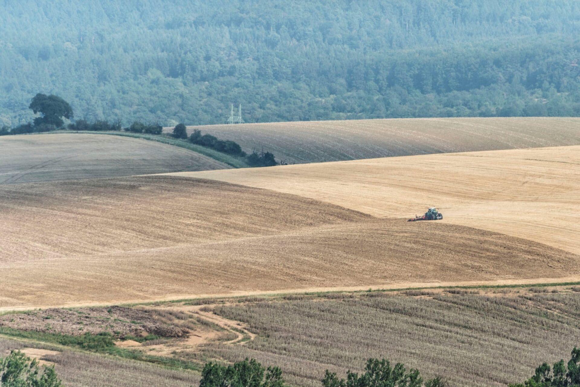 Вполях Южной Моравии.