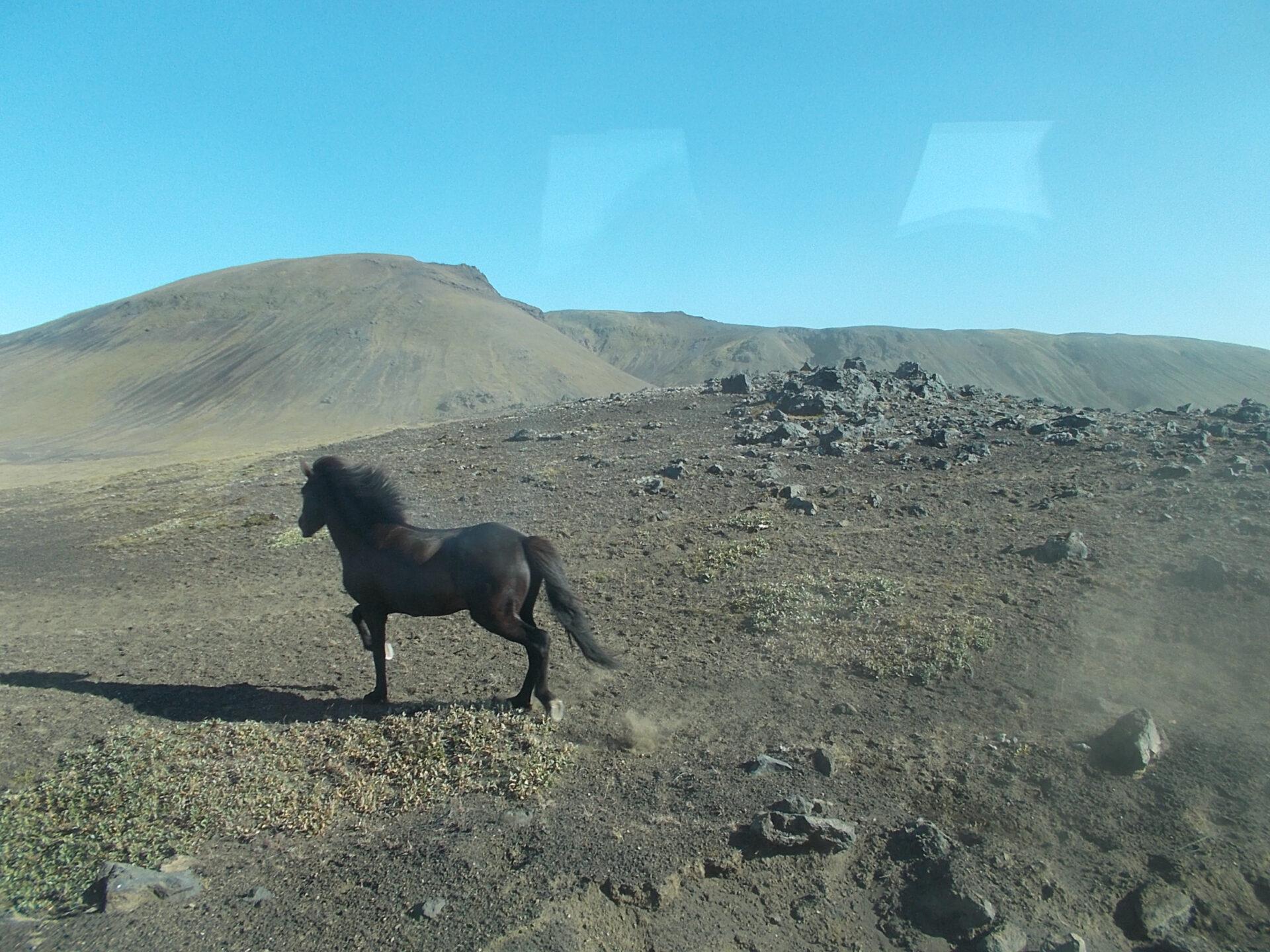 Марсианские лошадки, Исландия— долина Ландманналаугар