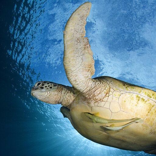 Остров черепах