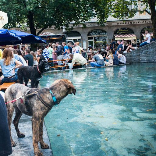 Собаки Мюнхена и не только