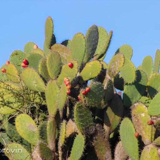Цветущая Пустыня Негев.