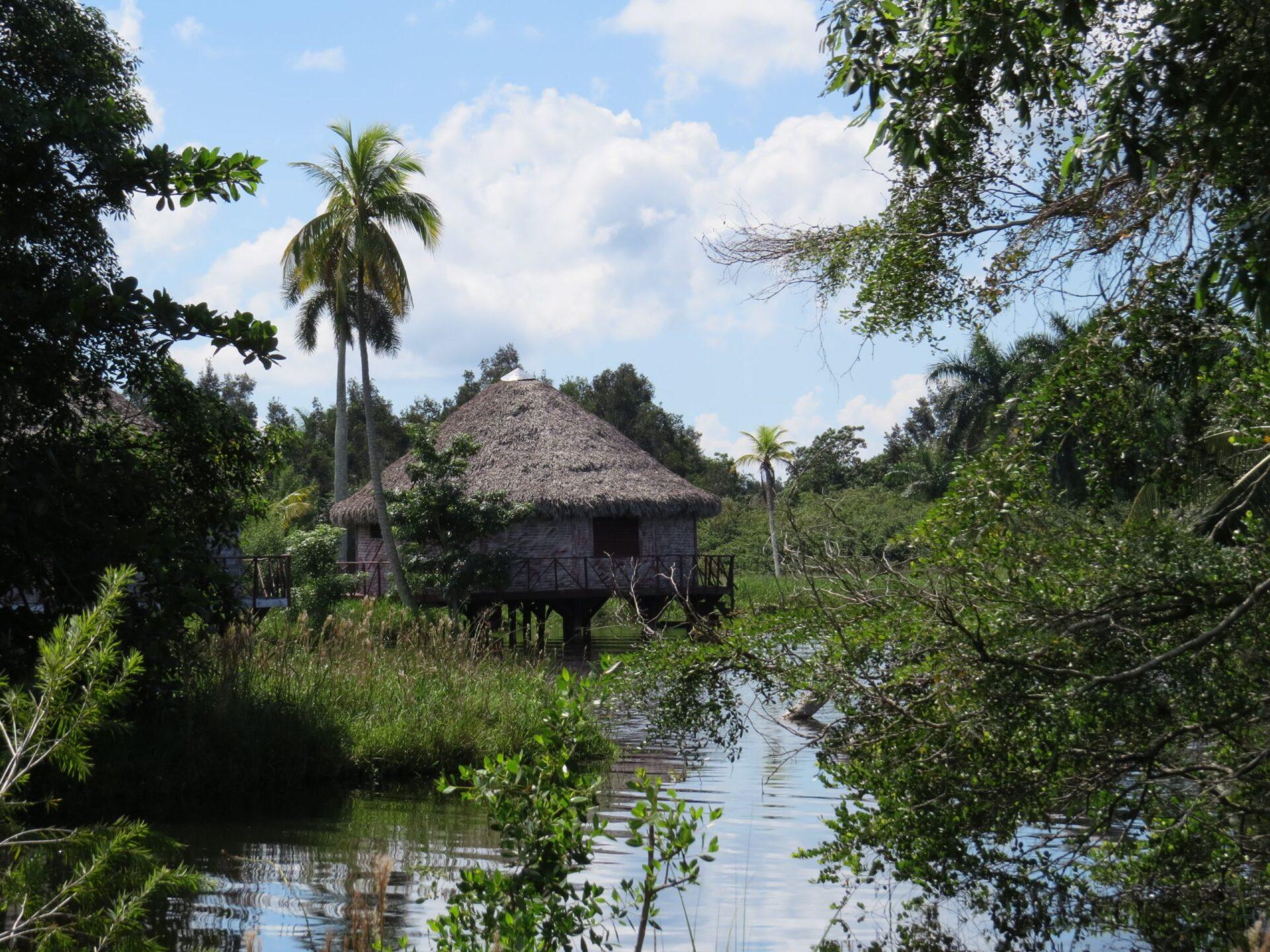 Речной курорт Гуама, крокодильчики