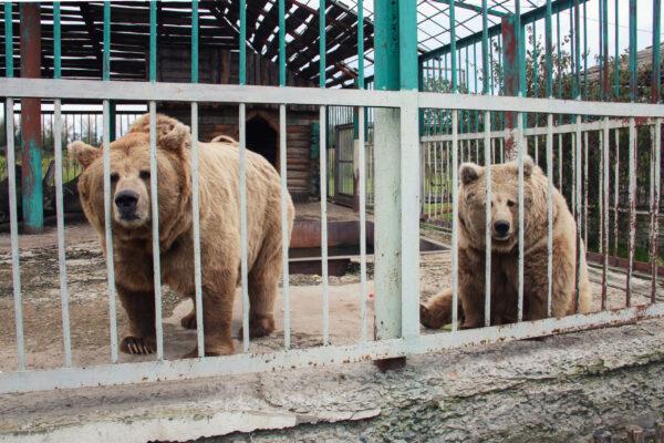 Старооскольский зоопарк