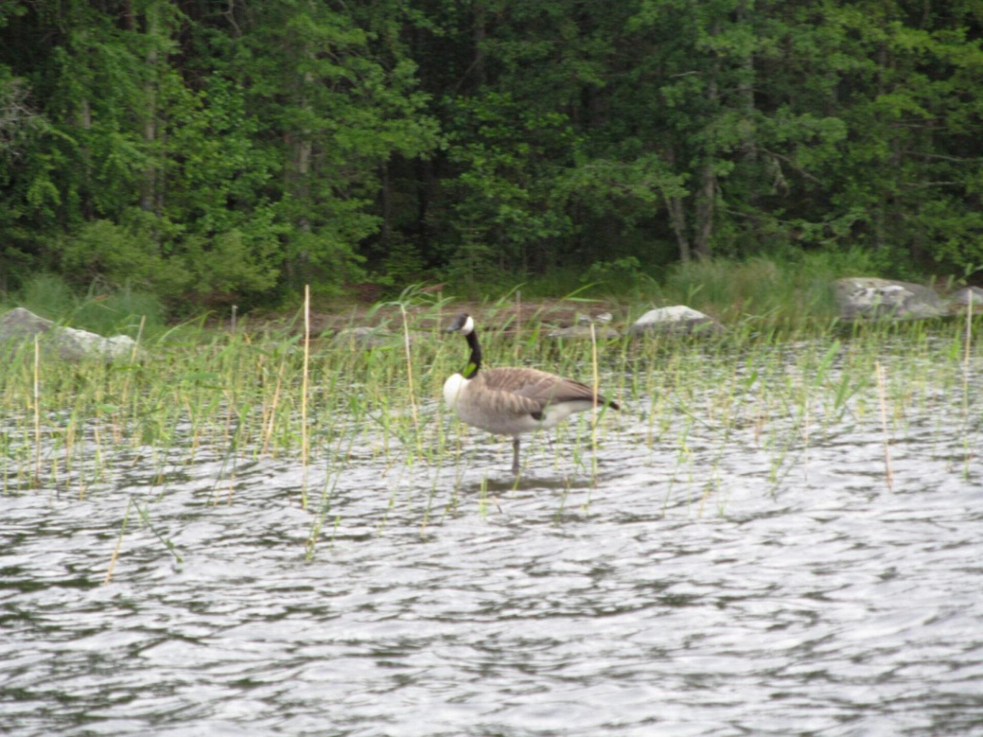 Финские озера— взгляд избайдарки
