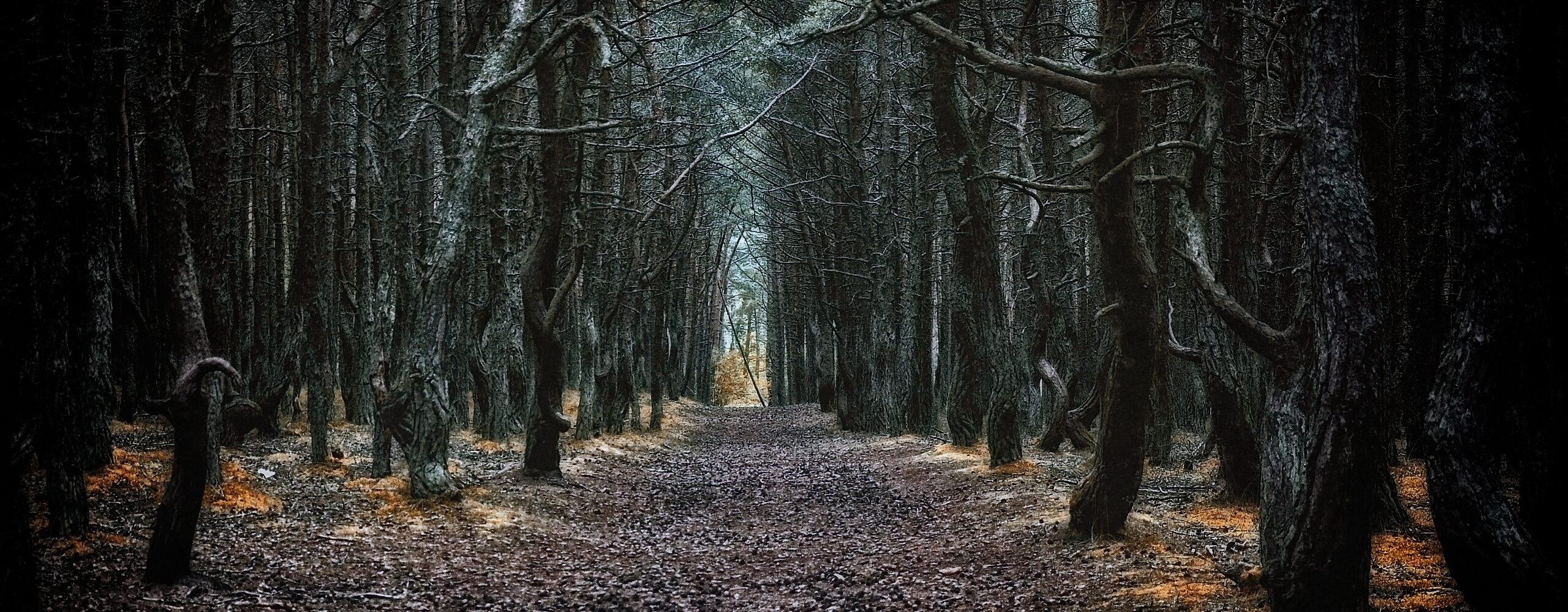 Куршская коса часть 2: Танцующий лес иВысота Эфа