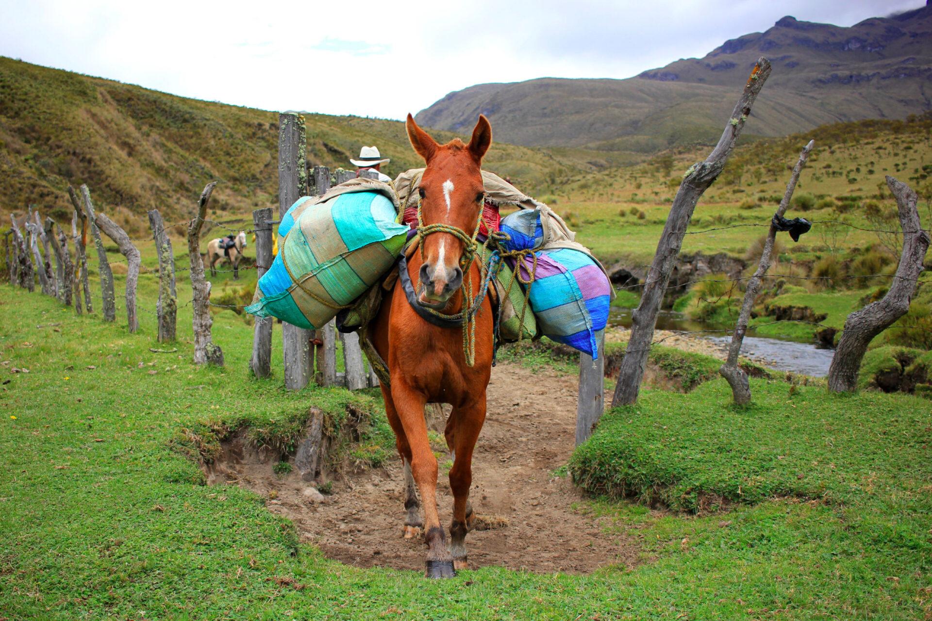 Поход понациональному парку Лос-Невадос. Колумбия