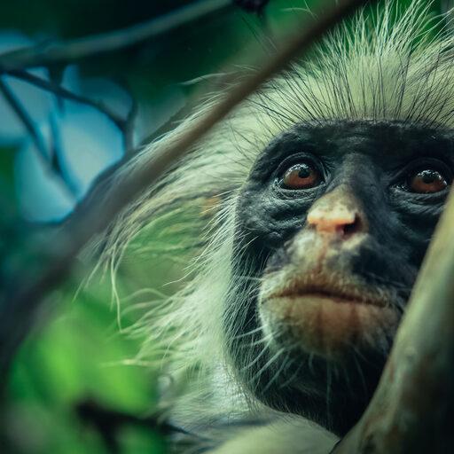 Жизнь Эндемиков на Занзибаре